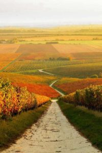 hungary-autumn-wine